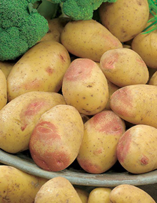 Potato King Edward 1kg bag