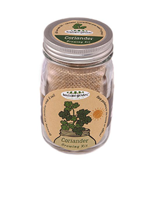 Mason Jar Grow Kits - Coriander