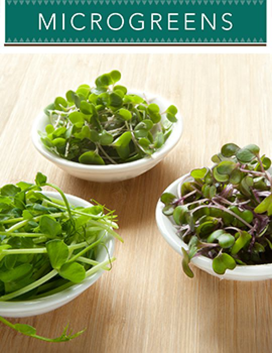 Microgreens Flavours of Eastern Europe - NOT AVAILABLE TO TAS