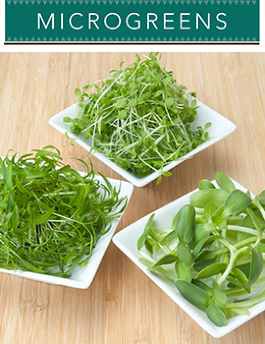 Microgreens Flavours of France - NOT AVAILABLE TO WA