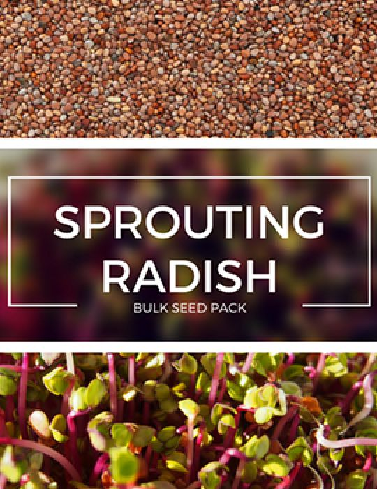 Sprouting Radish - BULK BAG
