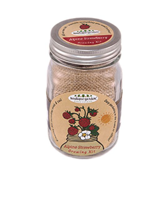 Mason Jar Grow Kits - Strawberry Alpine