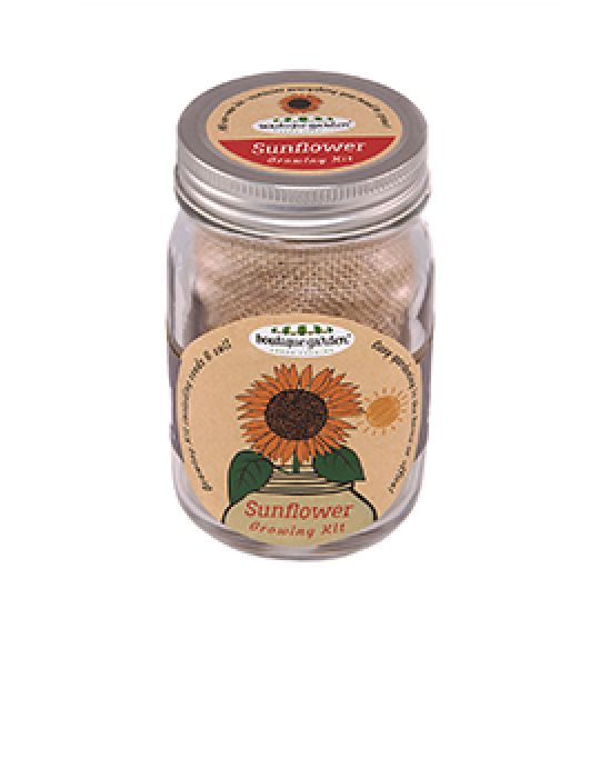 Mason Jar Grow Kits - Sunflower