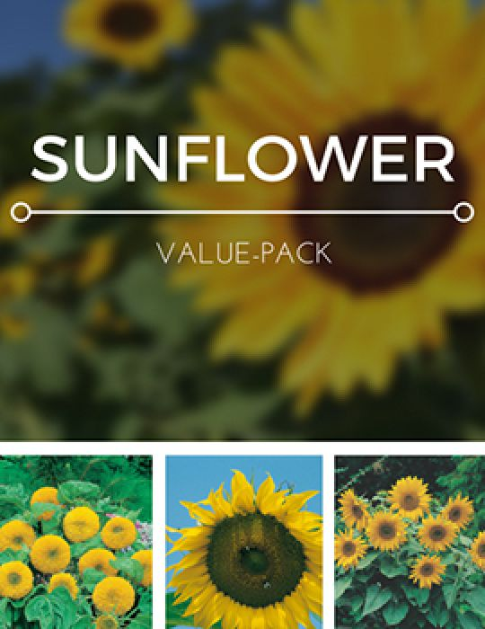 Sunflower Value Pack