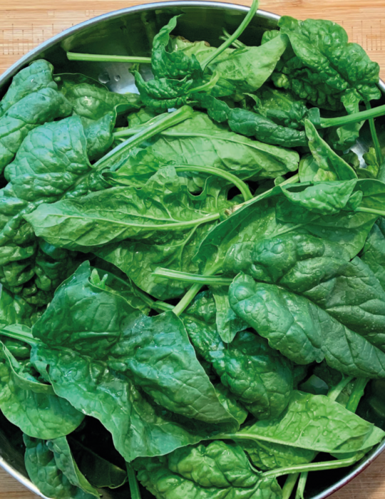 Spinach Bloomsdale Longstanding