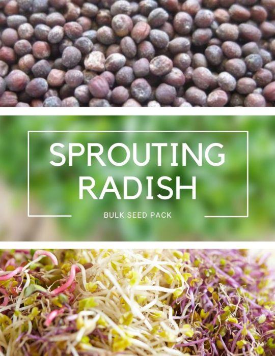 Sprouting Radish - BULK BAG
