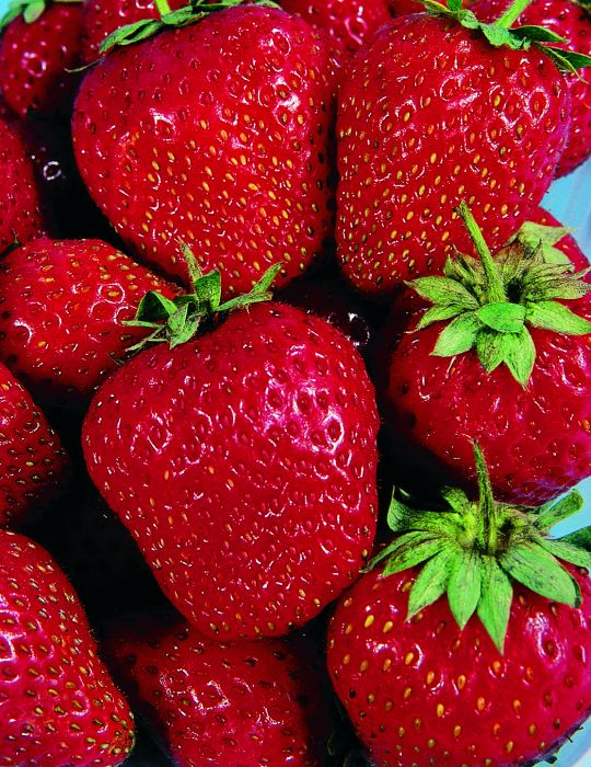 Strawberry Lowanna (Crowns)