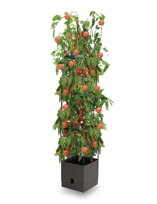 Grow Tower Kit - Tomato