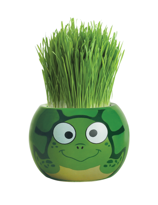Grass Hair Kit - Ocean Animals (Turtle)