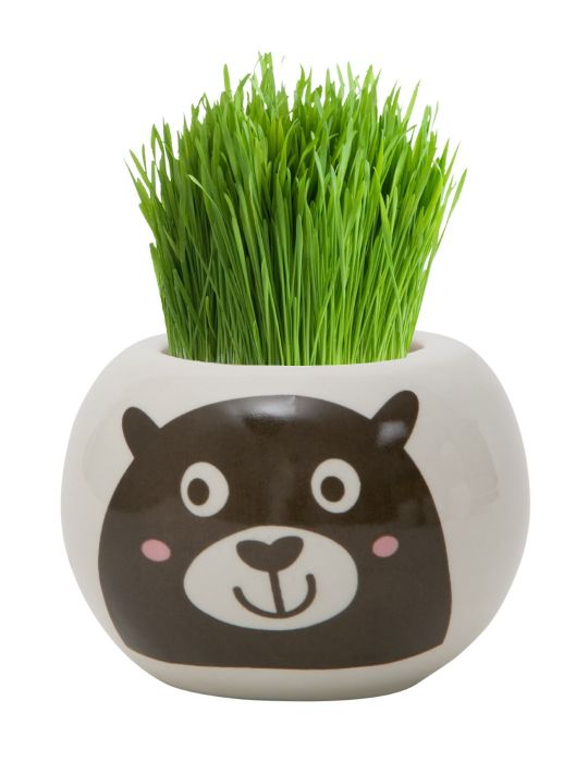 Grass Hair Kit - Wild Adventure (Bear)