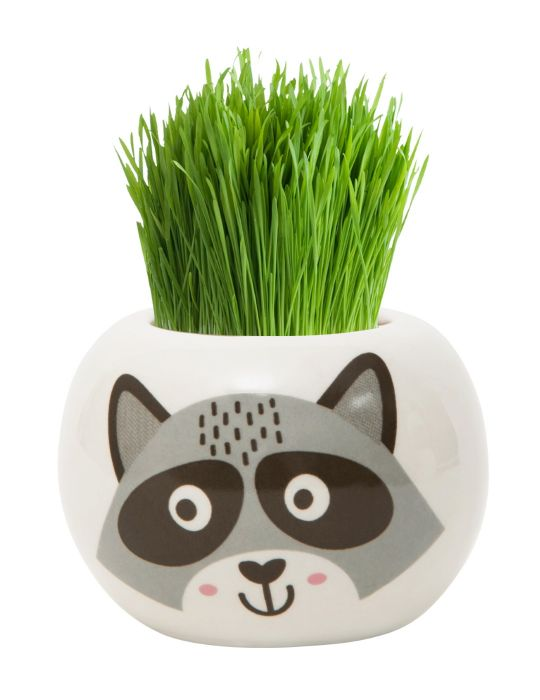 Grass Hair Kit - Wild Adventure (Raccoon)