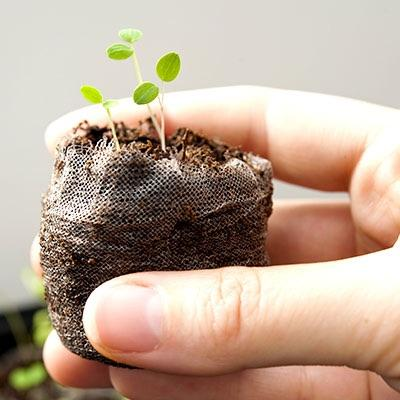 Start Your Seeds Indoors This Autumn!