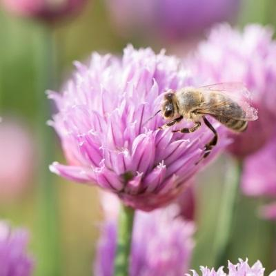 Bee kind and welcome pollinators into your garden