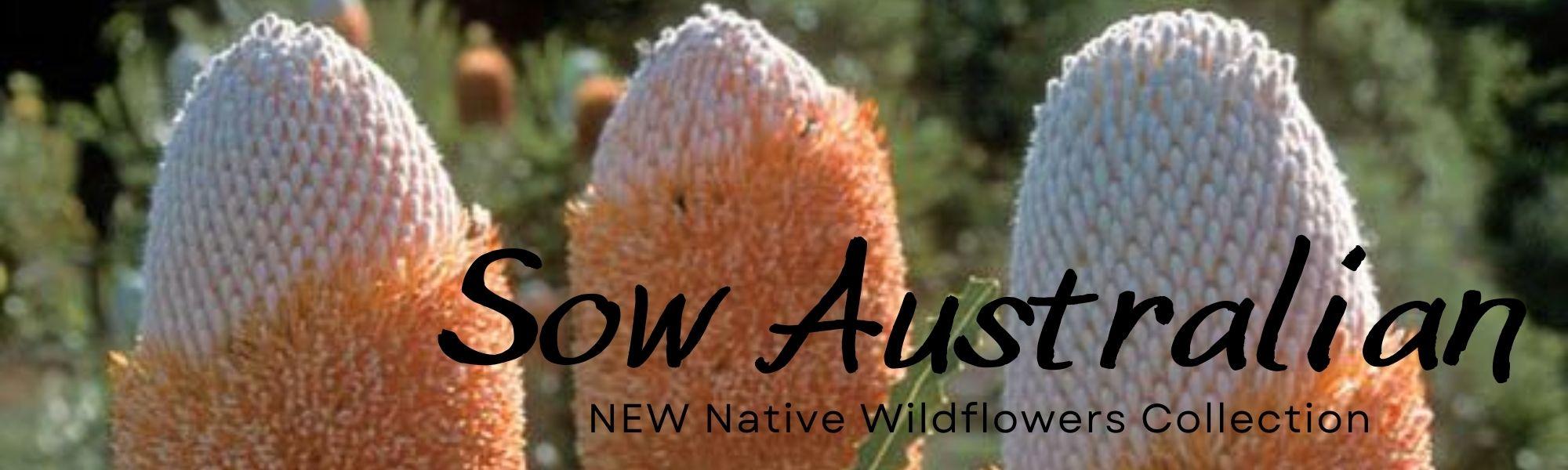 New Australian Wildflowers