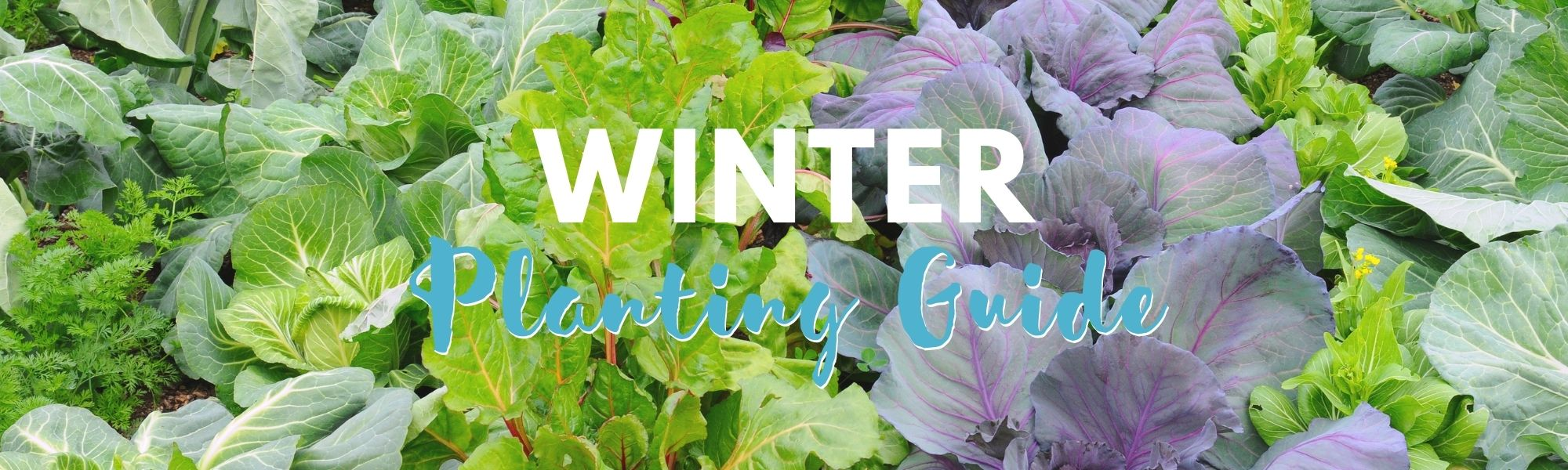 Winter Planning Guide
