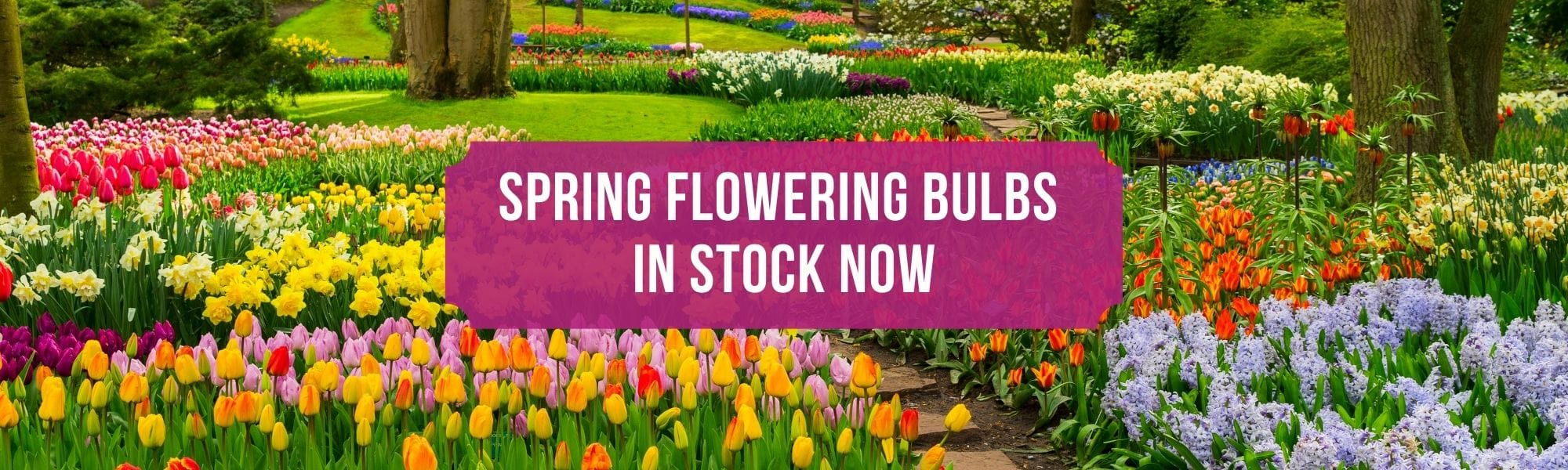 Spring Flowering Bulbs Available Now