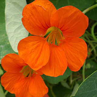 Don T Forget These Companion Flowers For Autumn